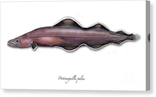 Living Fossil Eel - Protoanguilla Palau - Isle Of Palau Canvas Print