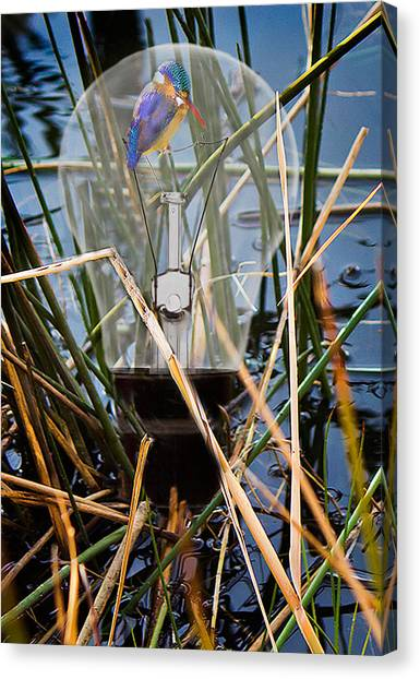 Pigmy Canvas Print - Living In Glass Houses by Ronel Broderick