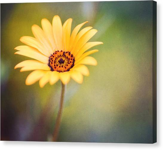 Vibrant Canvas Print - Living Life Boldly by Joel Olives