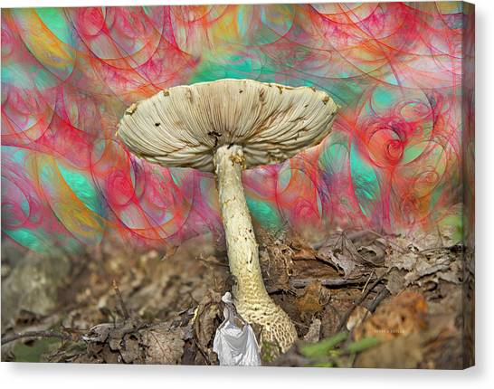 Shrooms Canvas Print - Living Myth  by Betsy Knapp