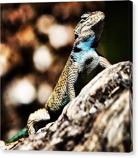 Lizards Canvas Print - #lizard #tree #ig #instagram by Artistic Shutter