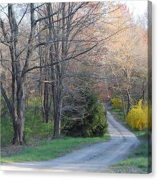 Dirt Road Canvas Print - #lockphotography #tree #picoftheday by Lock Photography