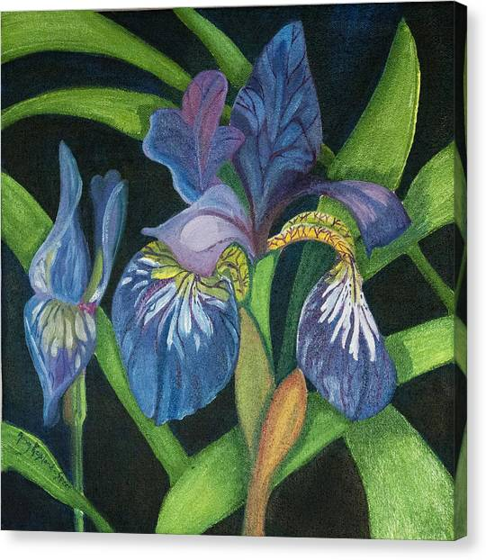 Lois' Iris Canvas Print by Amy Reisland-Speer