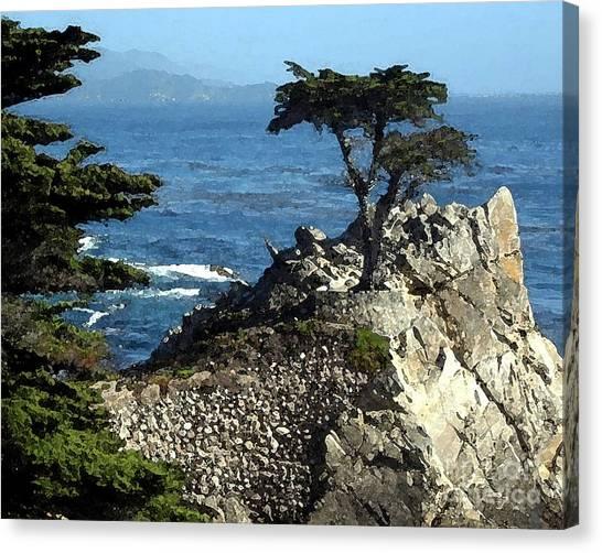 Lone Cypress Tree Canvas Print