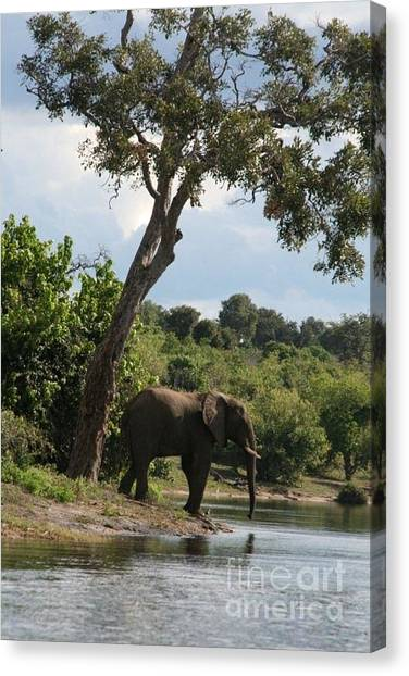 Lone Elephant Water Hole Canvas Print by Carol Wright