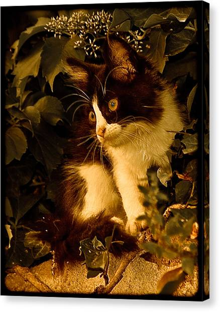 Athens, Greece - Lone Kitten Canvas Print