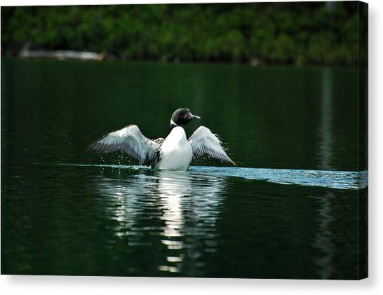 Lone Loon Canvas Print