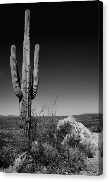 Cactus Canvas Print - Lone Saguaro by Chad Dutson