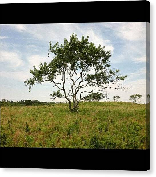 Marshes Canvas Print - Lone Tree by Cathy Marsh Photography