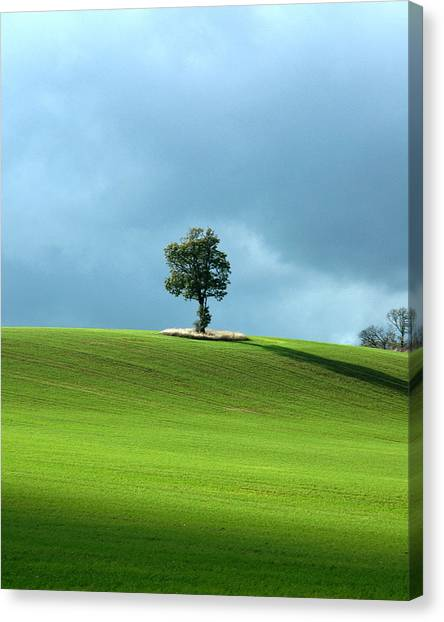 Lone Tree Sintinel Canvas Print by Duncan Nelson
