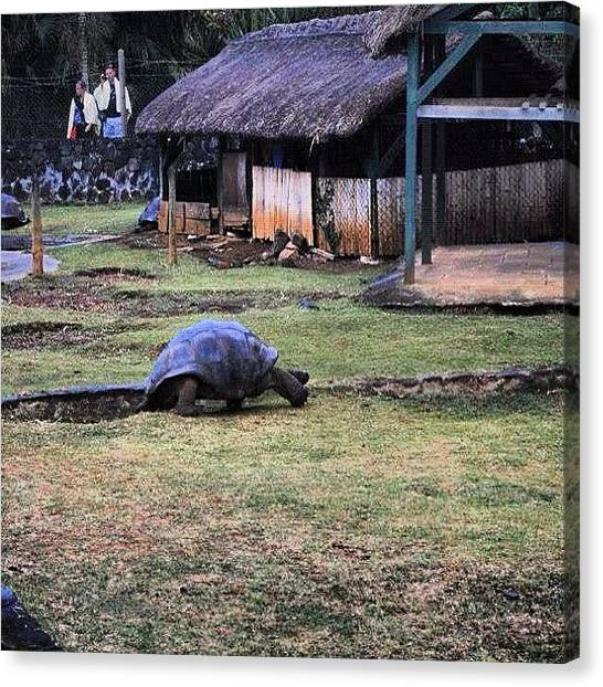 Tortoises Canvas Print - Lonely Giant Tortoise by Fotocrat Atelier