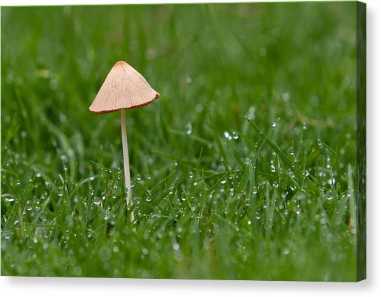 Lonely Mushroom Canvas Print by Miguel Capelo