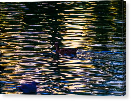 Lonely Swim Canvas Print by Joshua Dwyer