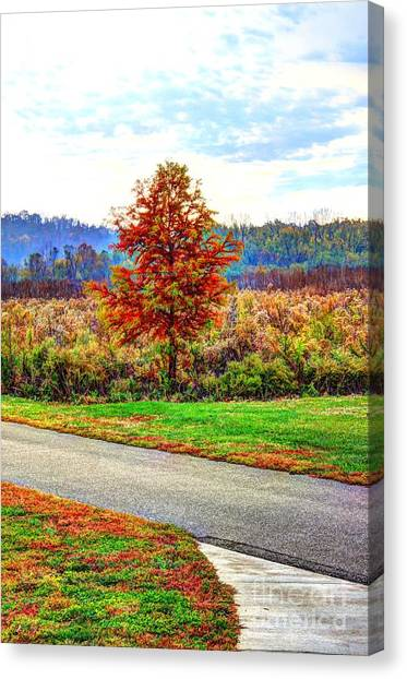 Lonely Tree 2 In Otto Armleder Park Canvas Print