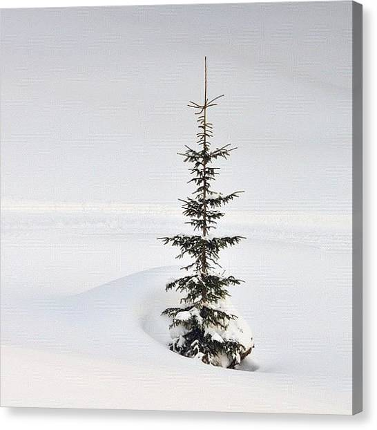 Minimalism Canvas Print - Lonely Tree by Matthias Hauser
