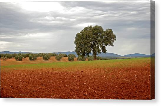 Lonely Tree Canvas Print by Perry Van Munster
