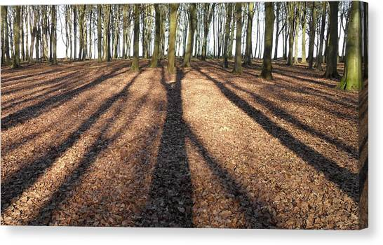 Long Shadows Canvas Print