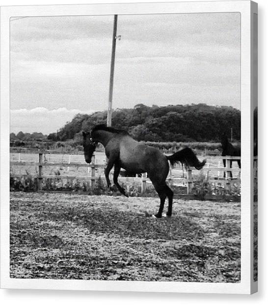 Thoroughbreds Canvas Print - Look At That Tail! :o #horse #ponies by Caitlin Hay