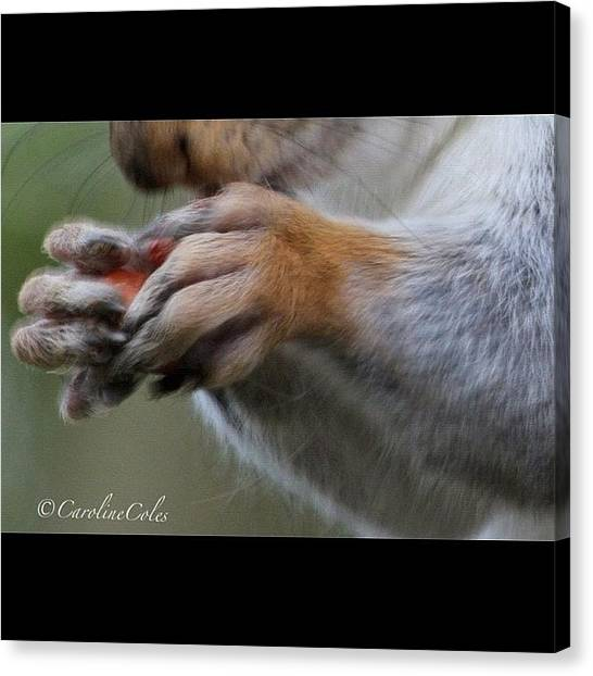 Squirrels Canvas Print - Look At Those Fingers! #squirrel by Caroline Coles