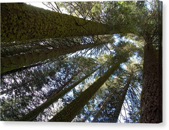 Canvas Print featuring the digital art Look Up And Dream by Visual Artist Frank Bonilla