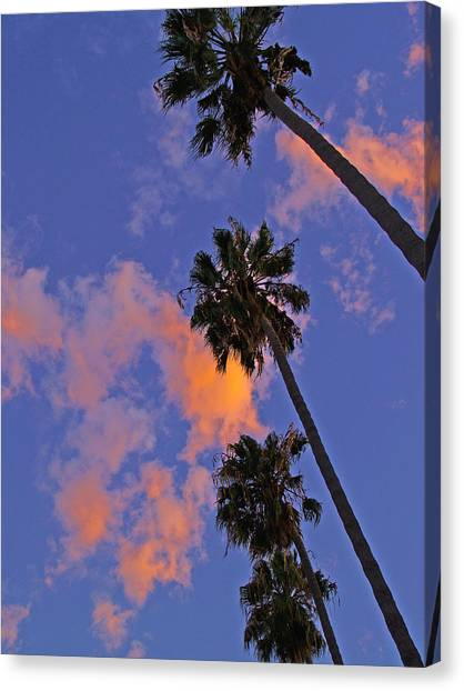 Look Up Canvas Print by D Wash