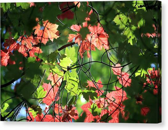 Look Up In Autumn Canvas Print by Julia Mayo