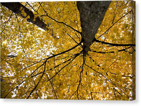 Look Up It Is Fall Canvas Print