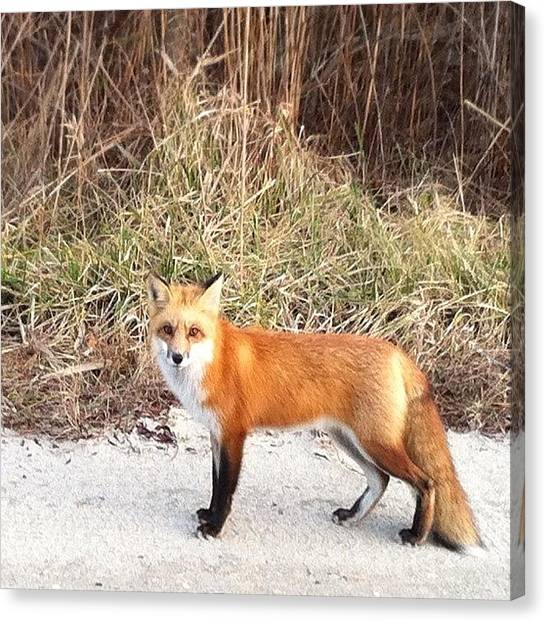 Foxes Canvas Print - Look Who We Just Met by Katie Cupcakes