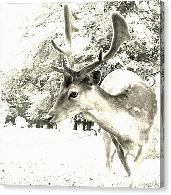 Head Canvas Print - Looking At You by Abbie Shores