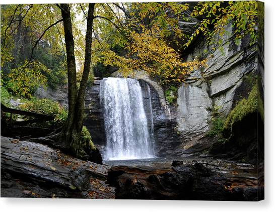 Looking Glass Falls Canvas Print