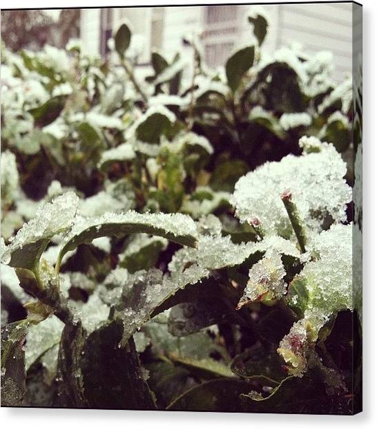 Snowflakes Canvas Print - Looks Like Its About That Time Of Year by Claudia Gordon