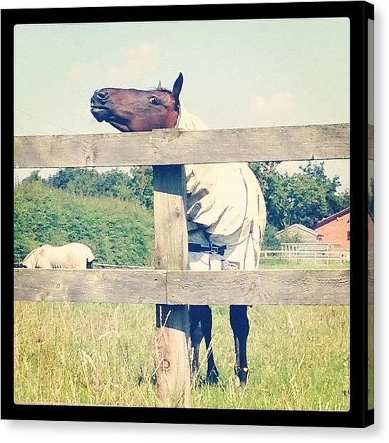 Ponies Canvas Print - Looks Like She's Itching Herself On by Caitlin Hay