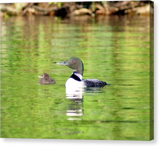 Loons Big And Small Canvas Print