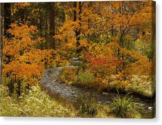 Lost Creek At Beavers Bend Canvas Print