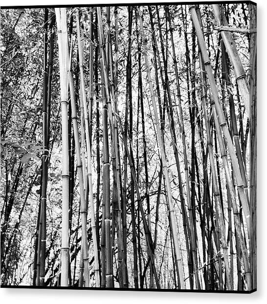 Bamboo Canvas Print - Lost Then Found Again by U p t o w n S u e