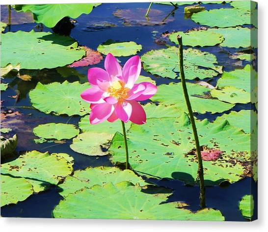 Lotus Flower Canvas Print by Jarrod Faranda