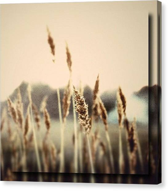 Marshes Canvas Print - Lou Reeds by Penni D'Aulerio