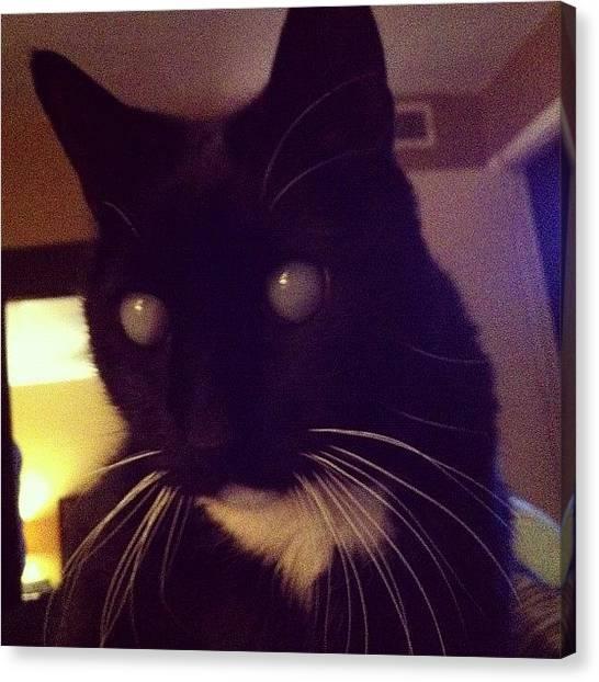 Tuxedo Canvas Print - Love Neiko #blackcats #blackbabies by Steven Griffin