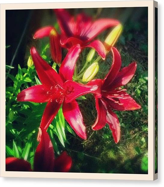 Lilies Canvas Print - Love #red #lily #flowers In My #backyard by Natalia D
