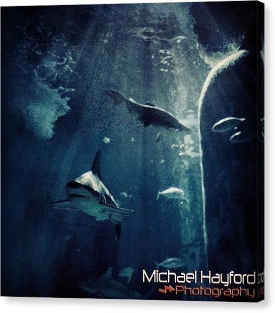 Hammerhead Sharks Canvas Print - Love Sealife #sealife #sea #animals by Mike Hayford