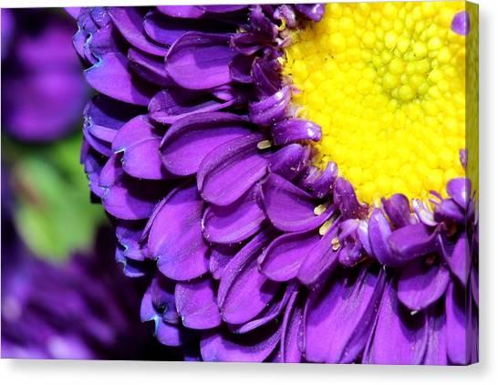 Love The Purple Flower Canvas Print