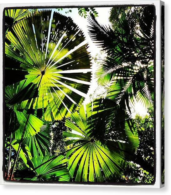 Rainforests Canvas Print - Love This One Of Rainforest Canopy by Shayle Graham