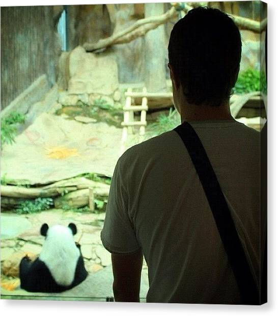 Panda Canvas Print - Love This Picture? Check Out My Gallery by Albert Gariev