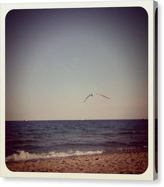 Seagulls Canvas Print - Love To Love Ya... #beach #bird #gull by Emily W