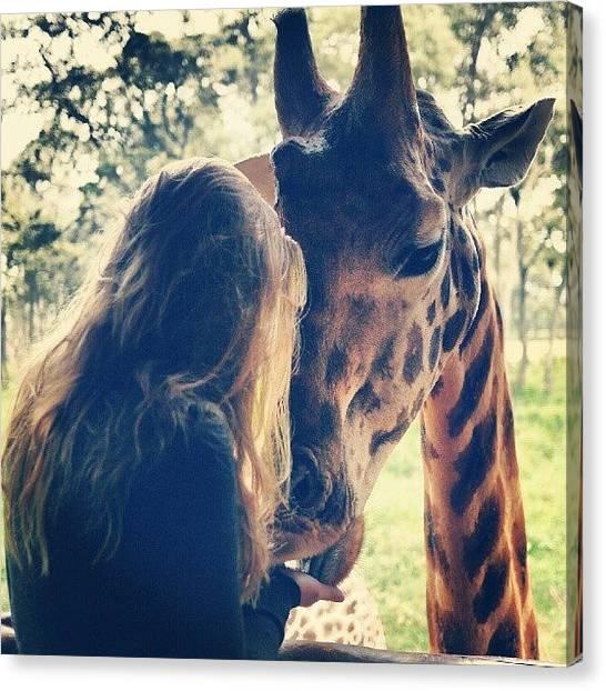 Giraffes Canvas Print - Love You Too Baby #giraffe #wildlife by Madelon Rusman