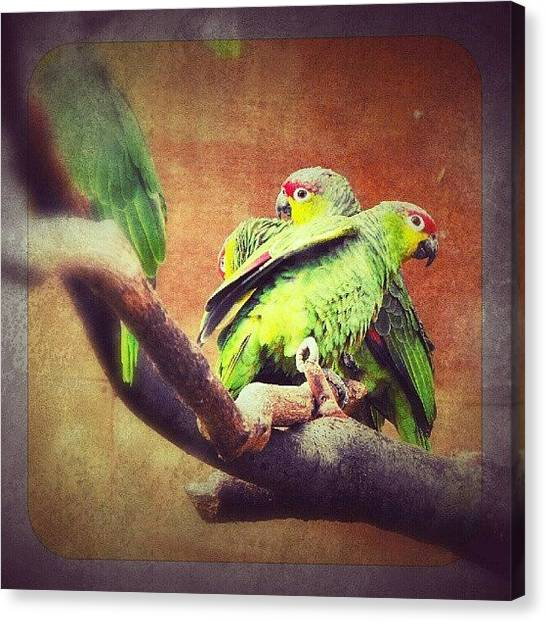 Lovebirds Canvas Print - Lovebirds by Alexandra Cook