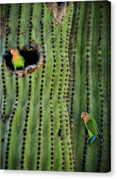 Lovebirds Canvas Print - Lovebirds And The Saguaro  by Saija  Lehtonen