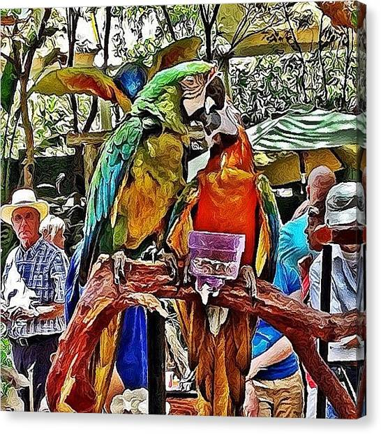 Lovebirds Canvas Print - #lovebirds @the #californiastatefair by Susan Scott