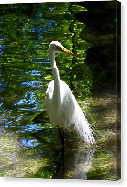 Lovely Bird Canvas Print by Judy Wanamaker