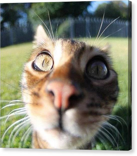 Scouting Canvas Print - Loving My New #lensbaby #scout #fisheye by Lana Houlihan